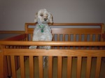 dog in baby crib