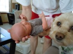 dog meeting baby