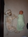swaddled baby with dog